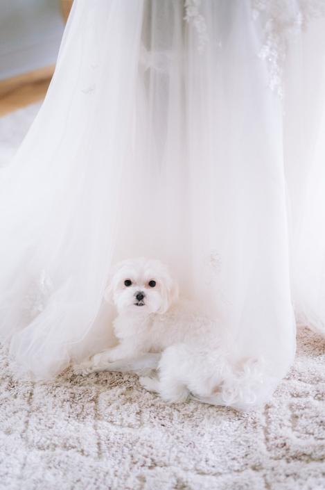 bride with puppy - Hudson NY wedding